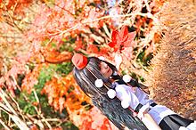 Tenshi Miyu - Picture 5